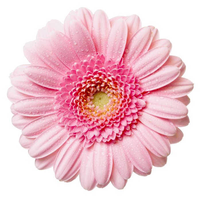 Flower High Res Clipart.