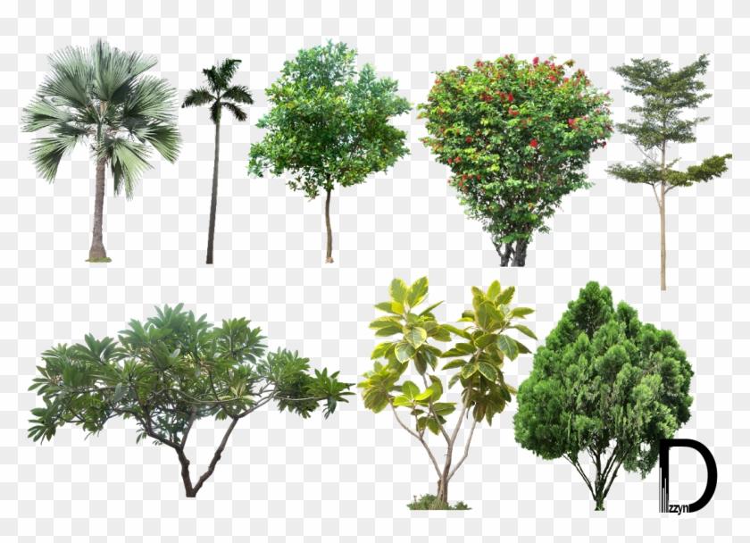 Landscape Png Photos.