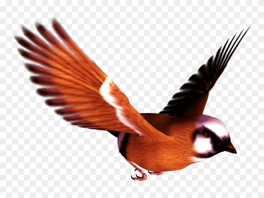 Songbird Clipart Free High Resolution.