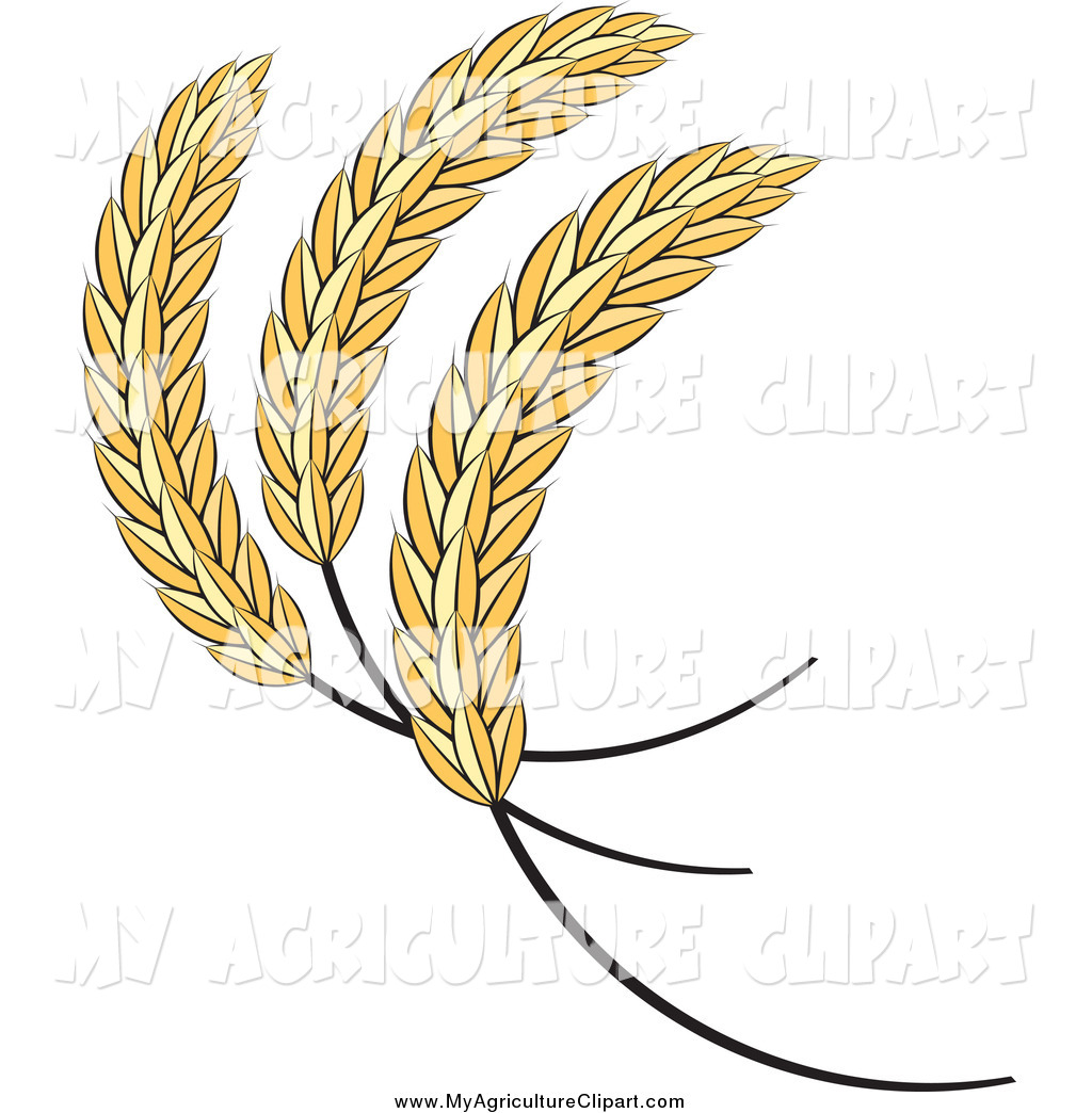 Vector Agriculture Clipart of a Sheaves of Wheat by Lal Perera.