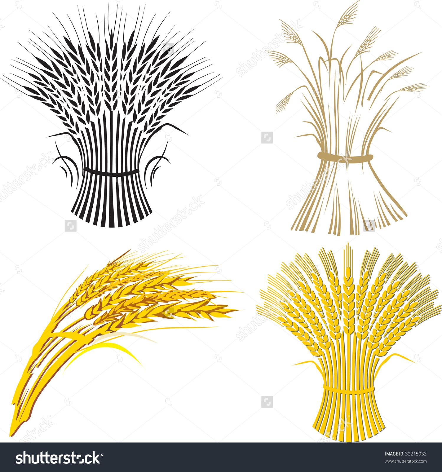 Four Wheat Sheaf Stock Vector Illustration 32215933 : Shutterstock.
