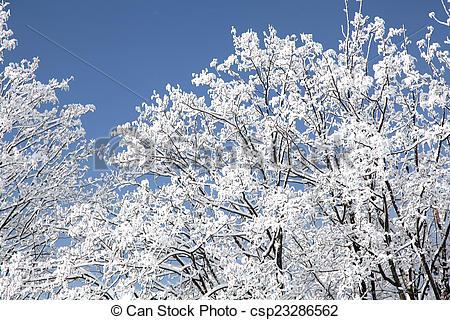 Stock Image of Snowy trees in High Tatras, Slovakia.