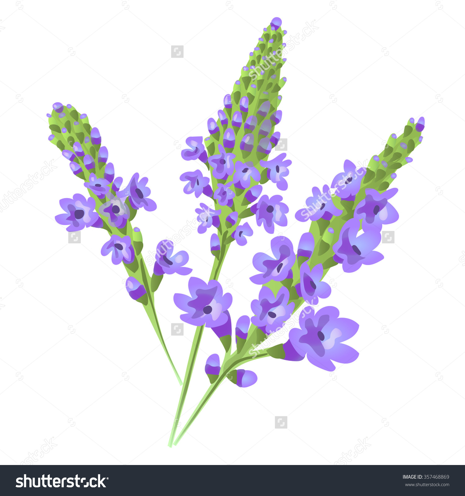 Purple Flowers. Verbena . Vector..