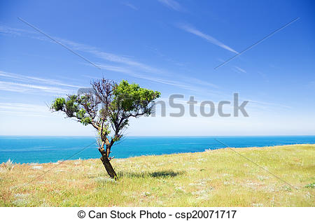 Clipart of Tree on seacoast.
