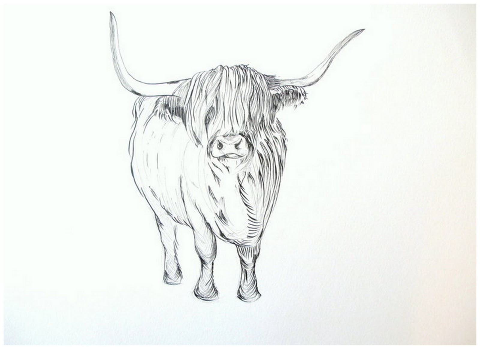 Details about HELEN ROSE Limited Print of my HIGHLAND COW original.