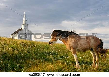 Picture of Clydesdale horse standing in field with church at.