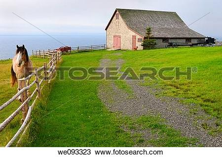 Stock Photo of Clydesdale horse and Barn over Bras dOr Lake at.