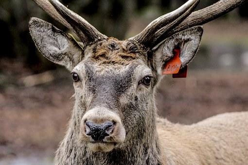 Head, Horns.