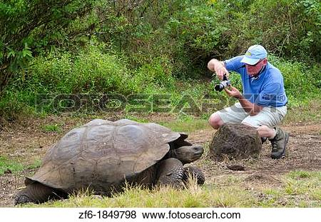 Pictures of Tourists relaying to fabulous Giant Tortoises with.