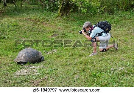 Picture of Tourists relaying to fabulous Giant Tortoises with.
