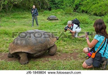 Stock Photo of Tourists relaying to fabulous Giant Tortoises with.