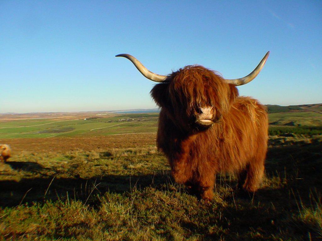 Scottish highlands desktop clipart.