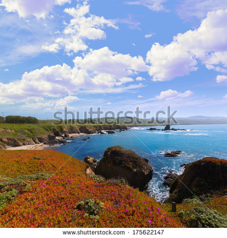 Coastal Flowers Stock Photos, Royalty.