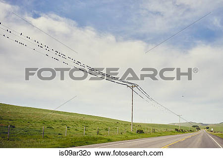 """Stock Photo of """"View of highway 1 and large group of birds perched."""