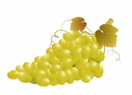 Daun Anggur Vector.
