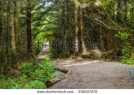 Hiking Trail Stock Photos, Royalty.