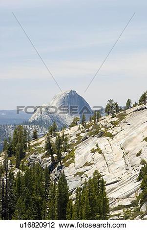 Stock Photo of Trees growing in a rocky hillside u16820912.