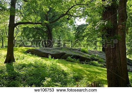 Stock Photo of A hillside view of Central Park, New York City.