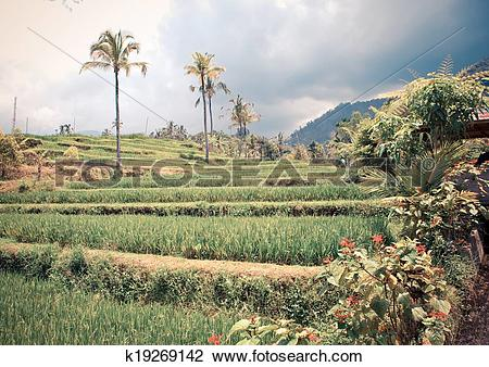Stock Photo of Tropical plants on a hill slope, Indonesia. Bali.
