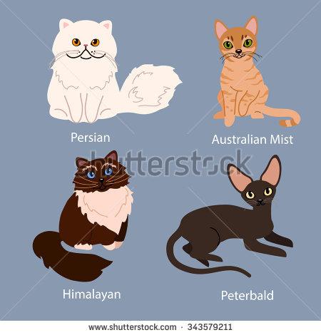 Himalayan Cat Cartoon.