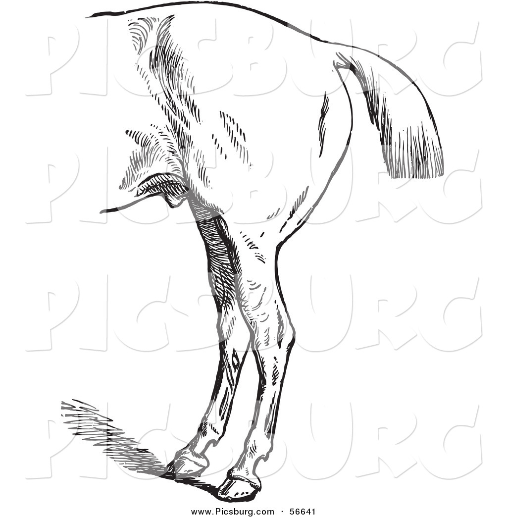 Clip Art of an Old Fashioned Vintage Engraved Horse Anatomy of Bad.