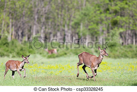 Stock Photo of Hinds running on meadow.