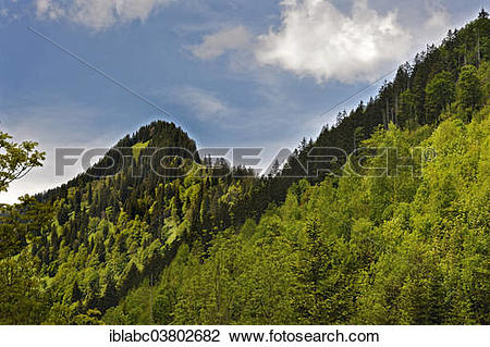"Stock Photo of ""Mixed forest near Hinterstein, Allgau, Bavaria."