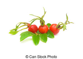 Rosehip Stock Photos and Images. 3,018 Rosehip pictures and.