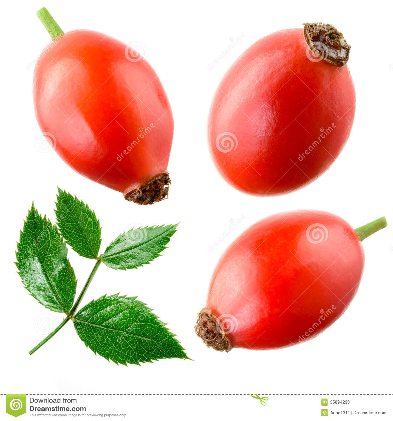 Rose Hip Isolated On A White. Collection Royalty Free Stock Photos.