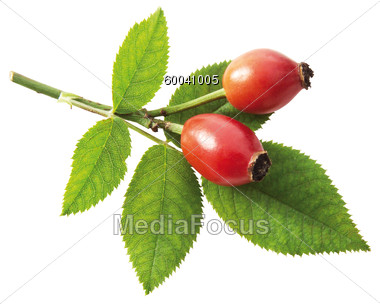 Stock Photo Rosehips With Leaves On Branch Clipart.