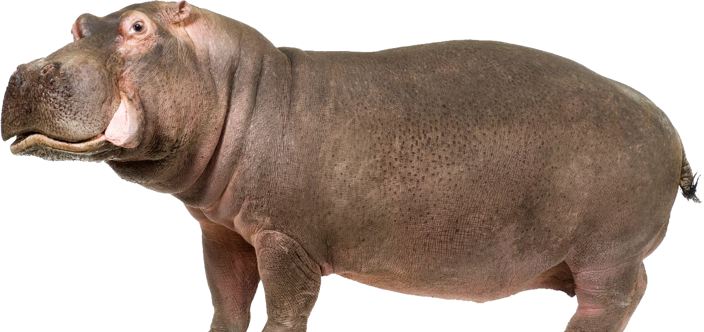 Hippo PNG images.