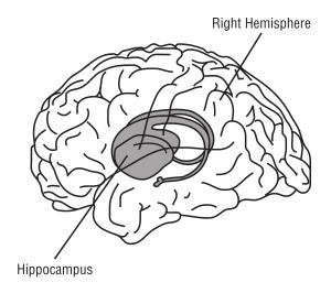 Hippocampus Clip Art Download.