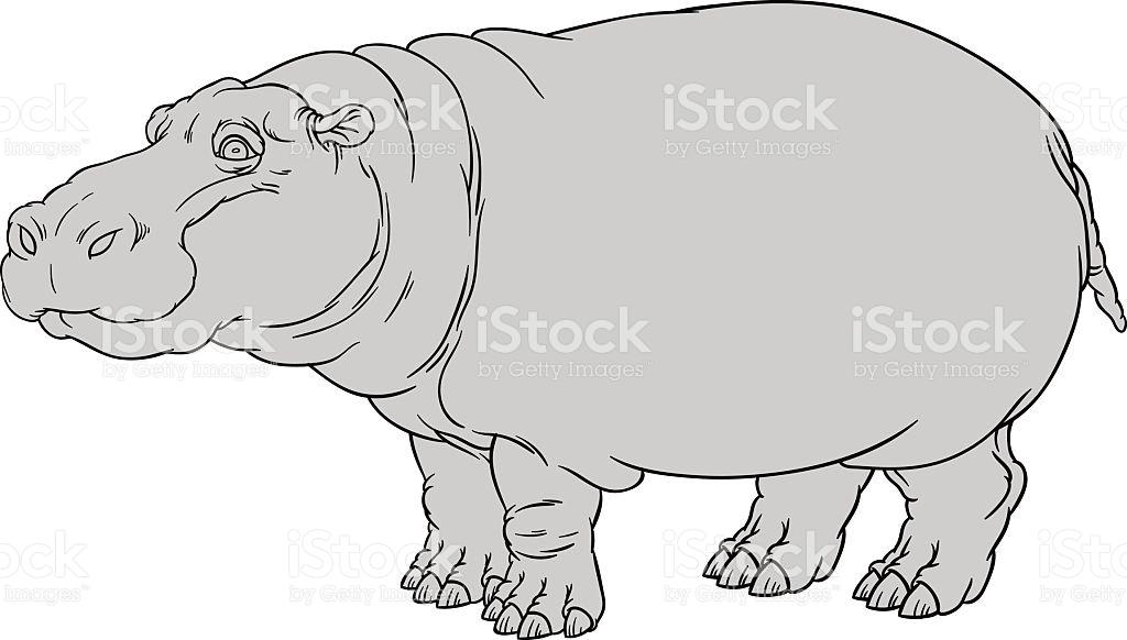 Hippopotamus Amphibius Or River Horse stock vector art 479057686.