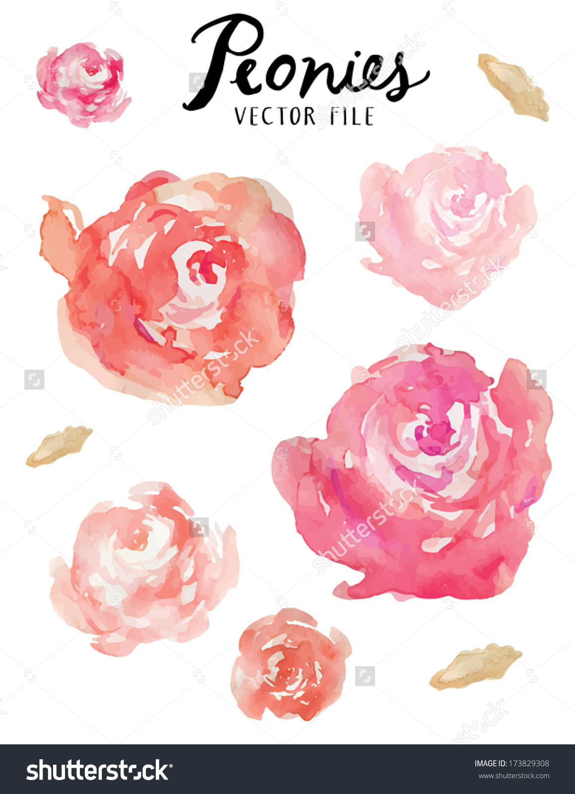 Free Pink Peony Clipart.