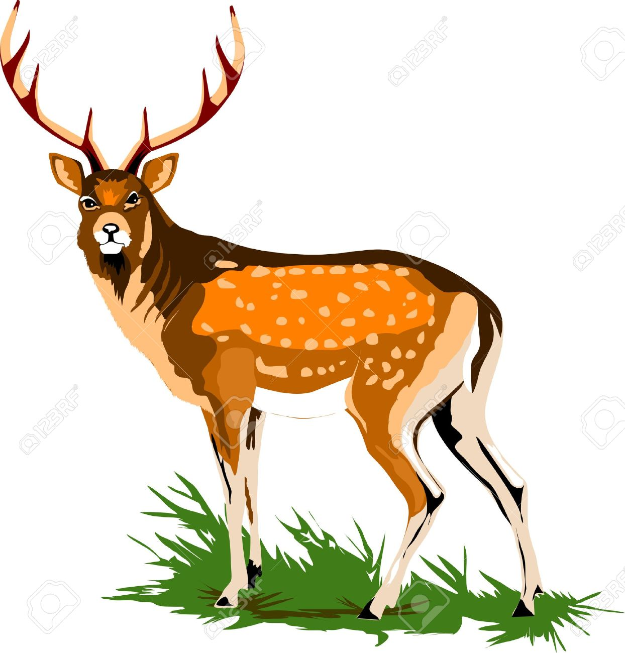 Royal Deer On A Green Meadow Royalty Free Cliparts, Vectors, And.