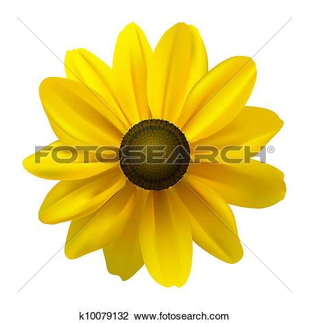 Clipart of Black Eyed Susan (Rudbeckia Hirta) flower k10079132.