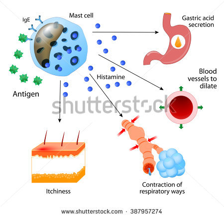 Histamine Stock Photos, Royalty.