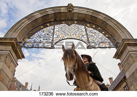 Stock Images of Frederiksborger. Dun stallion with rider in.