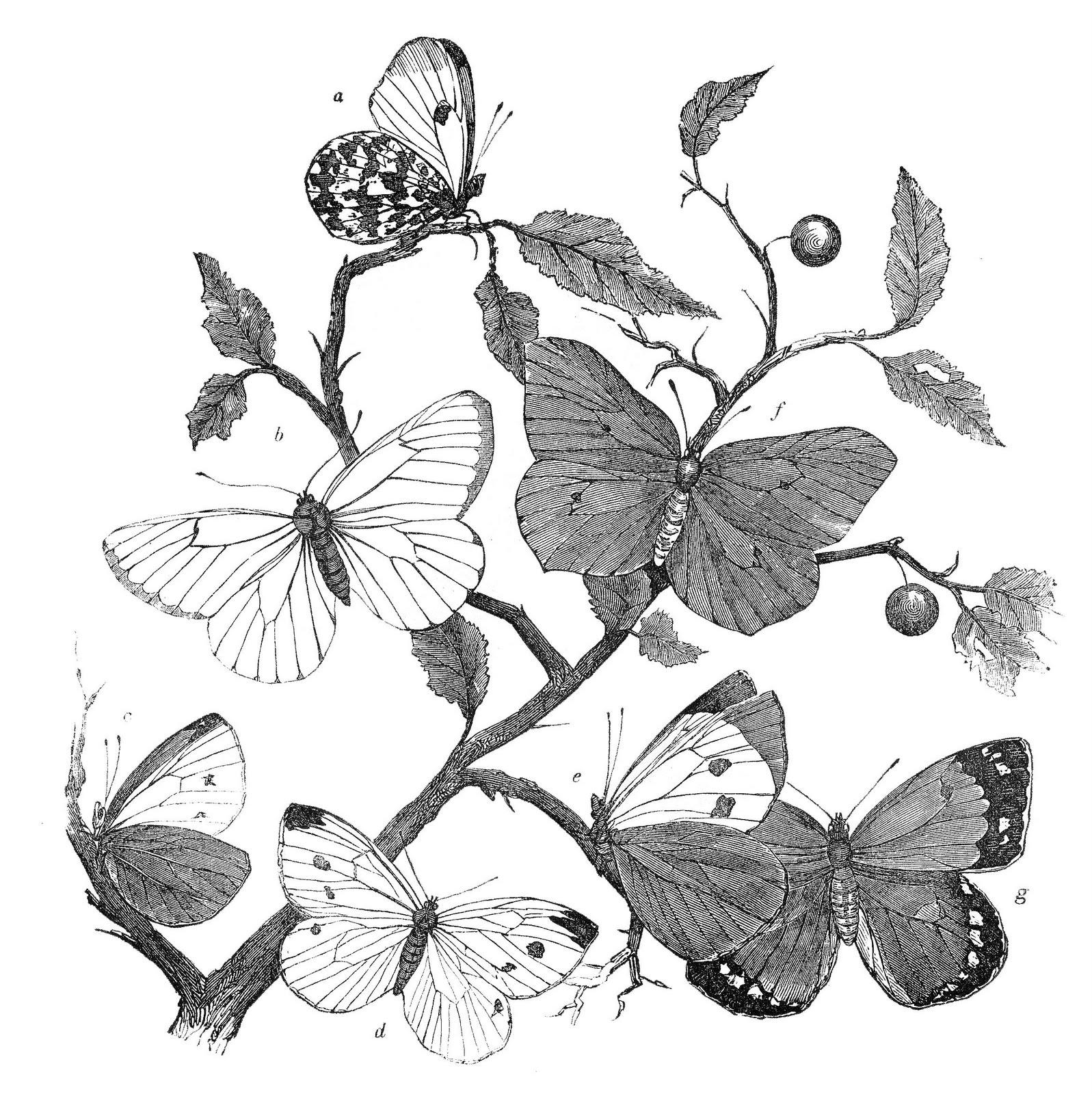 Antique Natural History Clip Art.