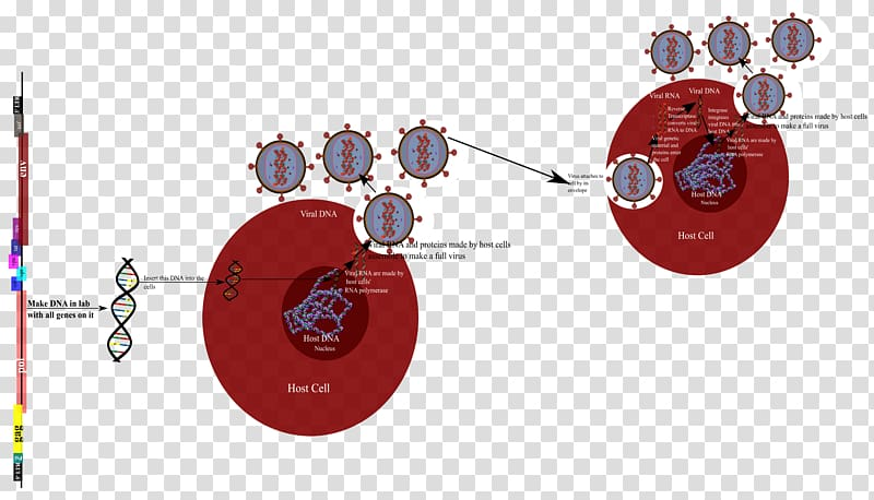Product design Diagram Graphics Technology, hiv virus.