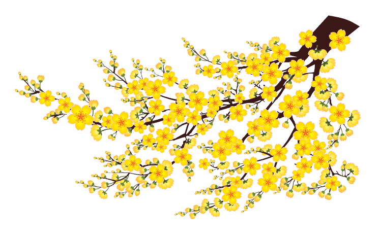 Vector hoa mai vàng tuyệt đẹp.