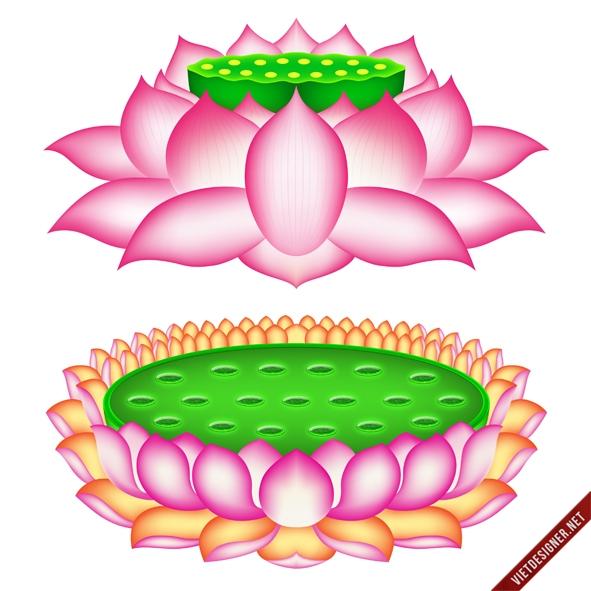 Share vector hoa sen kích thước lớn.