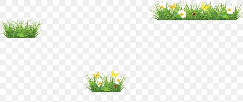絵とき植物生理学入門 Flower Grasses, PNG, 1600x670px, Flower.