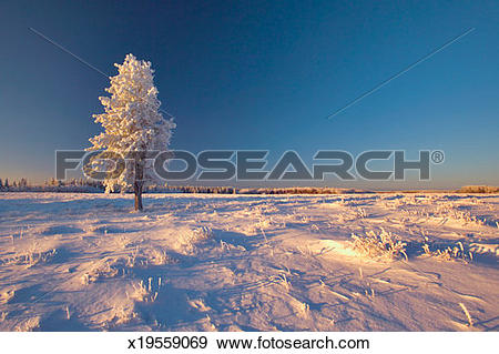 Stock Photograph of Canada, Saskatchewan, Cypress Hills Provincial.