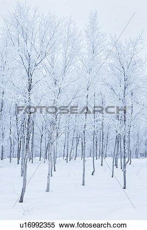 Stock Image of Snow and hoar frost.