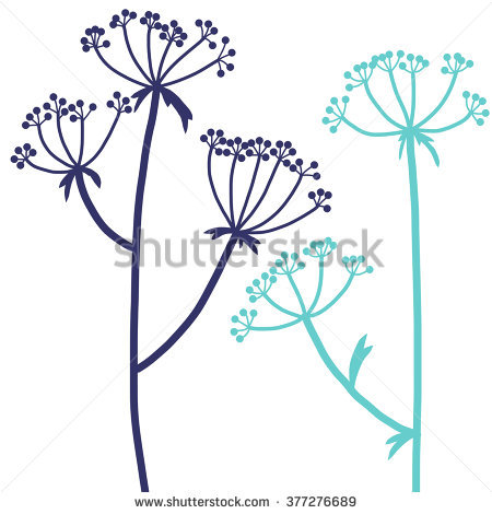 Hogweed Stock Photos, Royalty.