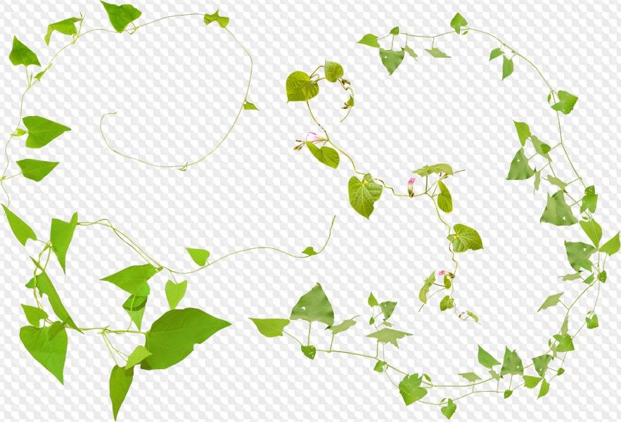 14 PNG, hojas verdes, ramas con hojas verdes, en un fondo transparente..