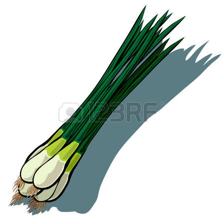 210 Scallion Stock Vector Illustration And Royalty Free Scallion.