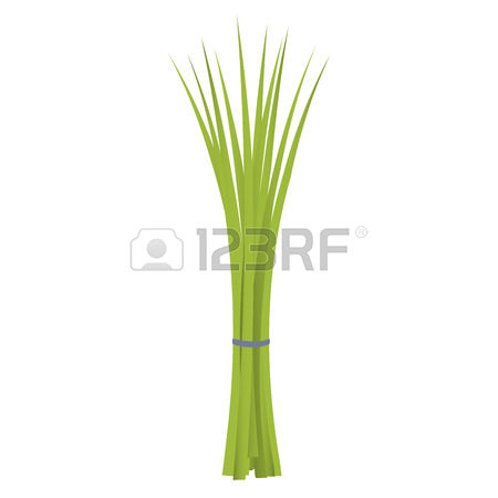 404 Chives Stock Illustrations, Cliparts And Royalty Free Chives.