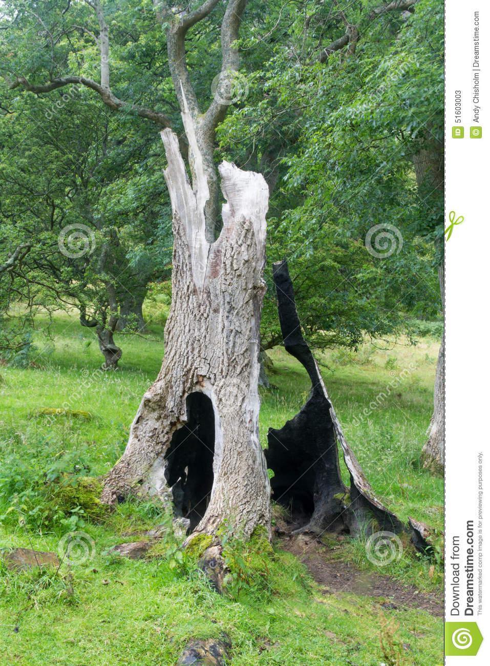 Hollow Tree Stump Stock Photo.